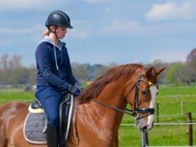 Margot met haar Paarden succesvol