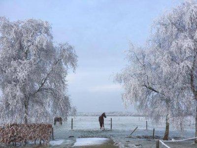 Wintersplaatje op De Haarhof